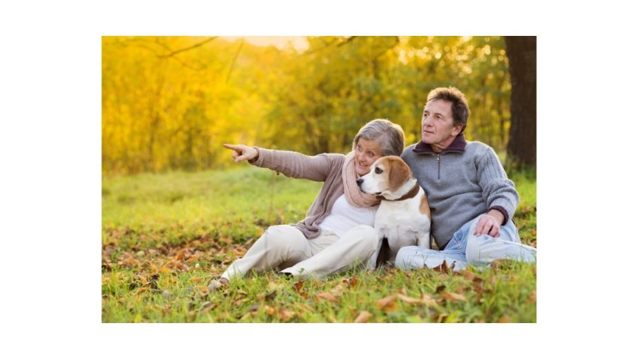 Non-Shedding and Hypoallergenic Dogs for Seniors
